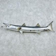 "47"" Replica Barracuda Fish Mount"