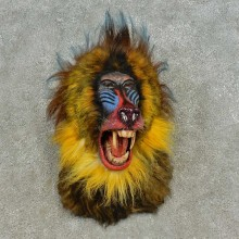 Reproduction Mandrill Baboon Shoulder Mount For Sale