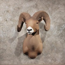 Reproduction Bighorn Ram Taxidermy Shoulder Mount For Sale