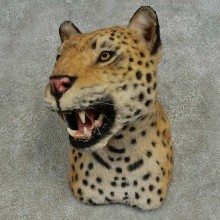 Reproduction Leopard Taxidermy Shoulder Mount For Sale