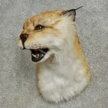 Reproduction Eurasian Lynx Shoulder Mount For Sale