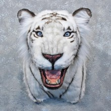 Reproduction White Tiger Taxidermy Shoulder For Sale