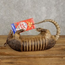 Reproduction Armadillo Life-Size Taxidermy Mount For Sale