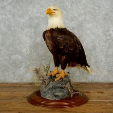 Reproduction Bald Eagle Taxidermy Bird Mount For Sale