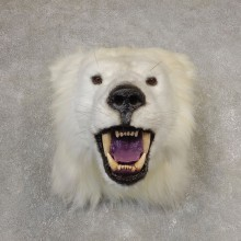 Reproduction Polar Bear Shoulder Mount #21060 For Sale @ The Taxidermy Store