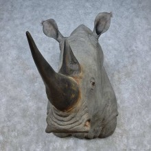African Rhinoceros Replica Taxidermy Shoulder Mount For Sale