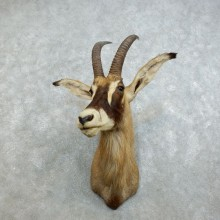 Roan Antelope Shoulder Mount For Sale #18531 @ The Taxidermy Store