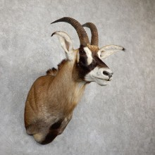 Roan Antelope Shoulder Mount For Sale #19498 @ The Taxidermy Store