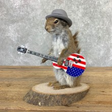 Rock N Roll Squirrel Novelty Mount For Sale #23004 @ The Taxidermy Store
