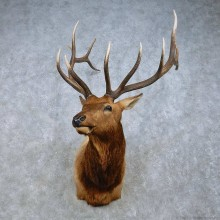 Rocky Mountain Elk Mount For Sale #15021 @ The Taxidermy Store