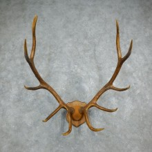 Rocky Mountain Elk Plaque Mount For Sale #18329 @ The Taxidermy Store
