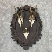Roe Deer Plaque Mount For Sale #22717 @ The Taxidermy Store