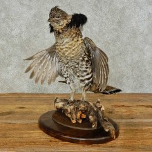 Ruffed Grouse Bird Mount For Sale #16266 @ The Taxidermy Store