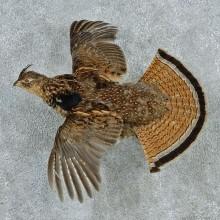 Flying Ruffed Grouse