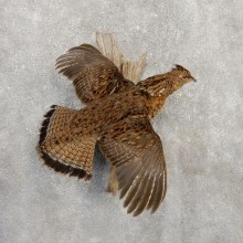 Ruffed Grouse Taxidermy Bird Mount For Sale