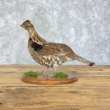 Ruffed Grouse Bird Mount For Sale #21397 @ The Taxidermy Store