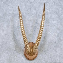 Sable Horn Plaque Taxidermy Mount For Sale #13995 @ The Taxidermy Store