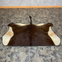 Sable Taxidermy Hide For Sale #22746 @ The Taxidermy Store