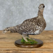 Sage Grouse Bird Mount For Sale #21358 @ The Taxidermy Store