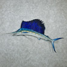 Sailfish Taxidermy Fish Mount #12597 For Sale @ The Taxidermy Store