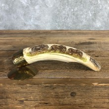 Scrimshawed Hippopotamus Tooth For Sale #19953 @ The Taxidermy Store