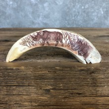 Scrimshawed Warthog Tooth For Sale #19945 @ The Taxidermy Store