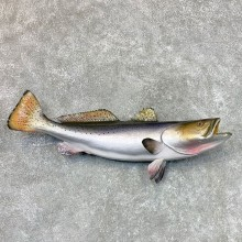 Sea Trout Fish Mount For Sale #22488 @ The Taxidermy Store