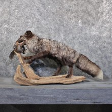 Silver Fox Mount w/ Quail #11830 For Sale @ The Taxidermy Store