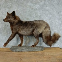Silver Fox Life-Size Taxidermy Mount #13371 For Sale @ The Taxidermy Store