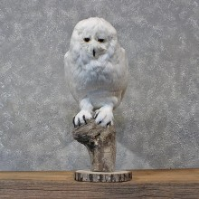 Reproduction Snowy Owl Taxidermy Bird Mount For Sale