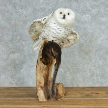 Snowy Owl Reproduction Bird Mount For Sale
