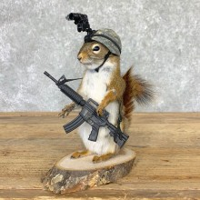Soldier Squirrel Novelty Mount For Sale #22999 @ The Taxidermy Store