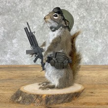 Soldier Squirrel Novelty Mount For Sale #23000 @ The Taxidermy Store