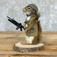 Soldier Squirrel Novelty Mount For Sale #23001 @ The Taxidermy Store