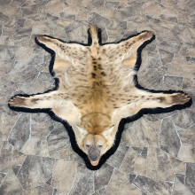 Spotted African Hyena Full-Size Taxidermy Rug #23021 For Sale @ The Taxidermy Store