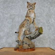 Standing Bobcat Taxidermy Mount #12571 For Sale @ The Taxidermy Store