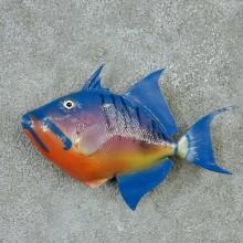 Triggerfish Life Size Mount