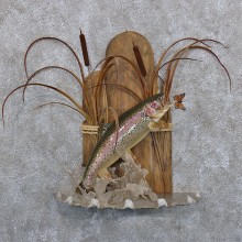 Rainbow Trout Taxidermy Fish Mount #10374 For Sale @ The Taxidermy Store