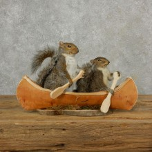 Two Novelty Canoe Grey Squirrels 17100 @The Taxidermy Store