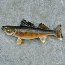 Walleye Taxidermy Fish Mount #13394 For Sale @ The Taxidermy Store