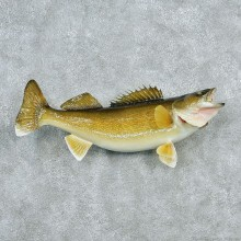 Walleye Pike Taxidermy Fish Mount #12788 For Sale @ The Taxidermy Store