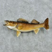 "24"" Walleye Pike Fish Mount"