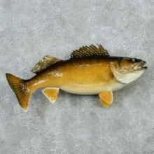 "21"" Walleye Pike Fish Mount"