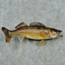 Walleye Life-Size Mount #13513 For Sale @ The Taxidermy Store