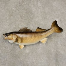 Walleye Taxidermy Fish Mount #21601 For Sale @ The Taxidermy Store