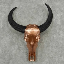 Water Buffalo Skull Horn Taxidermy Mount #13831 For Sale @ The Taxidermy Store