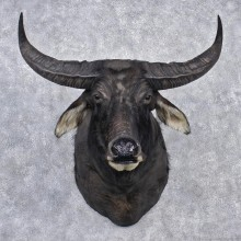 Water Buffalo Taxidermy Head Mount #12533 For Sale @ The Taxidermy Store