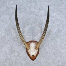 African Waterbuck Horn Plaque Mount For Sale #14441 @ The Taxidermy Store