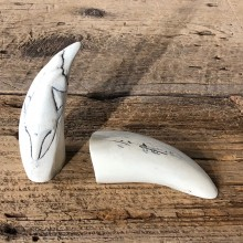 Whale Tooth Replica Mount For Sale #19395 @ The Taxidermy Store