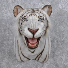 Reproduction White Bengal Tiger Shoulder Mount #12281 For Sale @ The Taxidermy Store